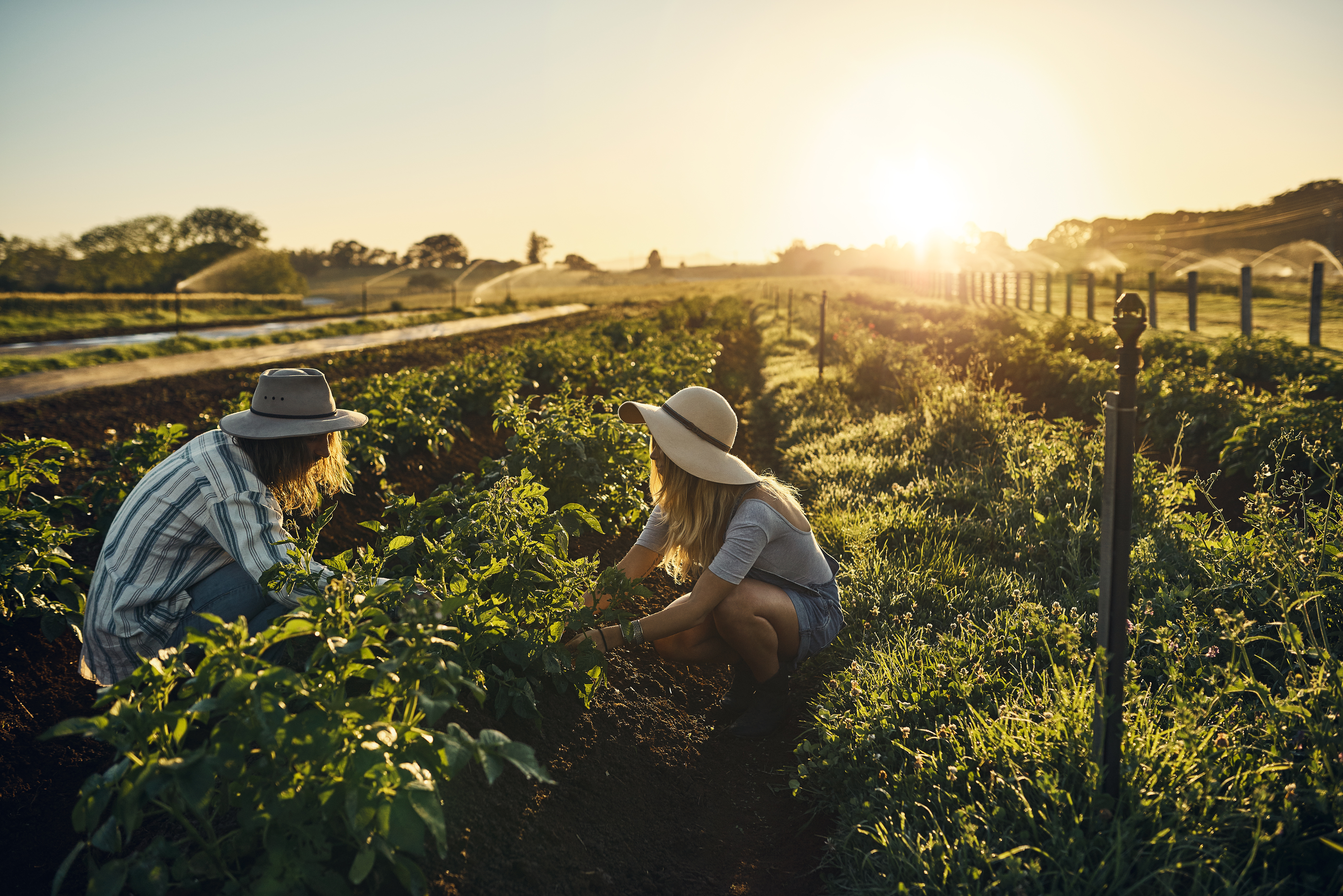 Shot of a group of farmers tending to their crop of herbs on a farm